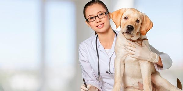Los veterinarios se ocupan de prevenir y curar enfermedades en los animales.