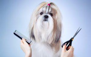Importancia de la  peluquería canina en el entorno urbano